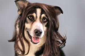 dog-1776721_1920